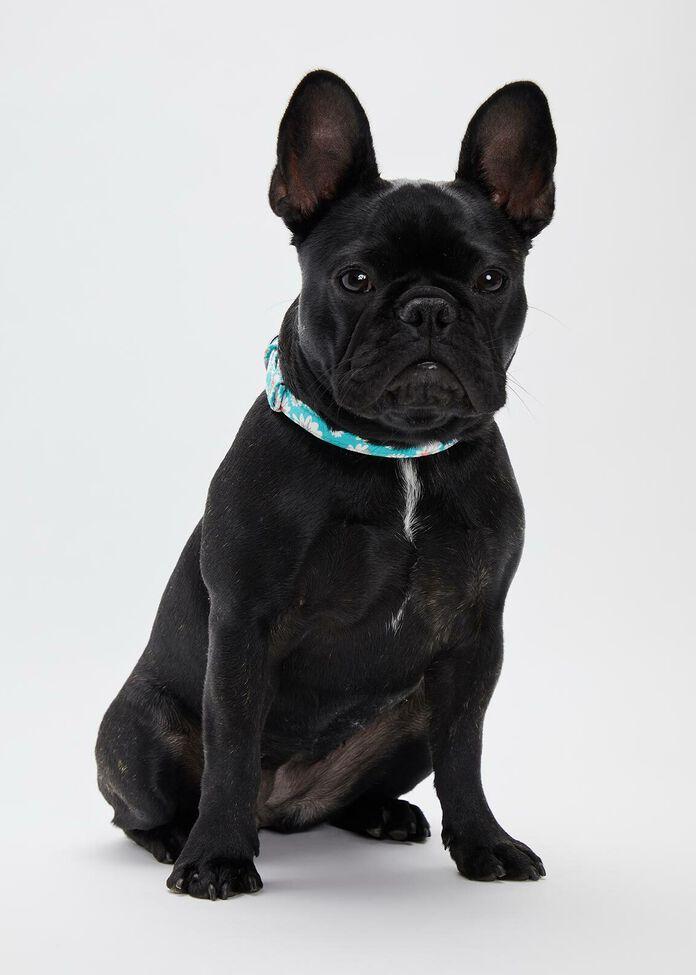 Daisy Buckle Pet Collar, , hi-res